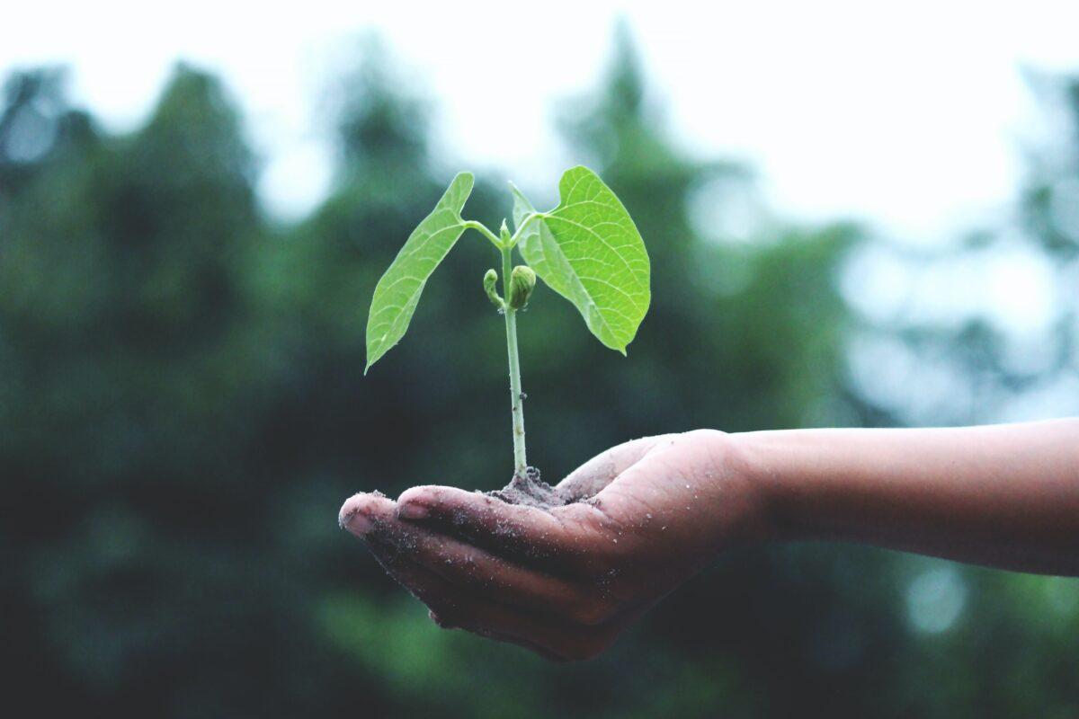 Aposta per l'horticultura sostenible al mediterrani