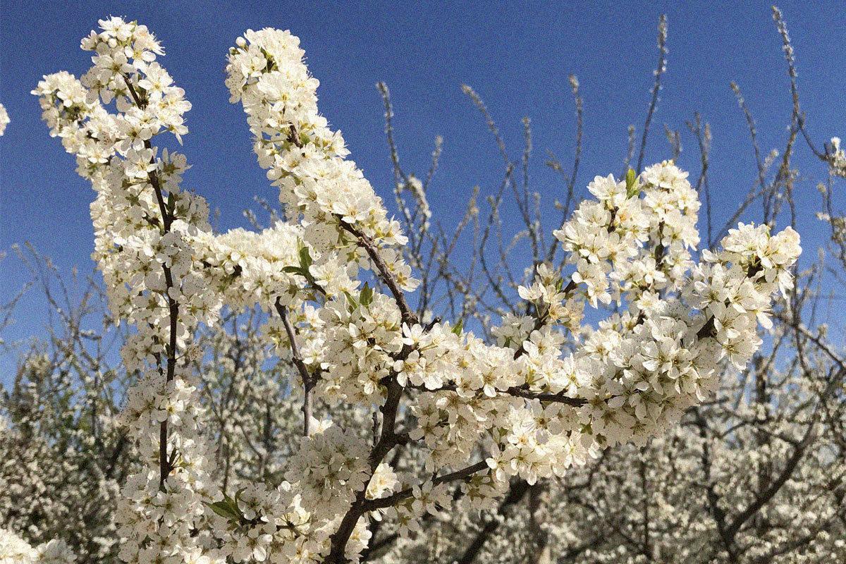 Visita els nostres camps florits!
