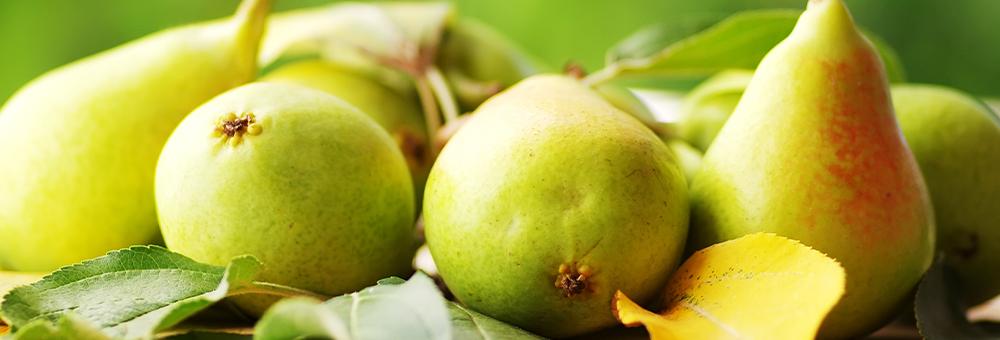 Gaudeix de la pera Ercolina i conserva-la fresca com el primer dia
