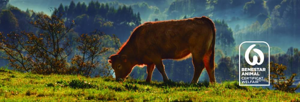 Compromís amb el benestar animal